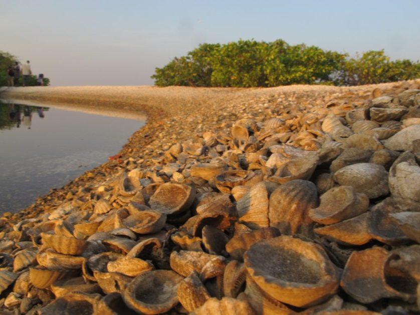 Toubacouta,Sine-Saloum Delta, Le Senegal, West Africa, Afrika
