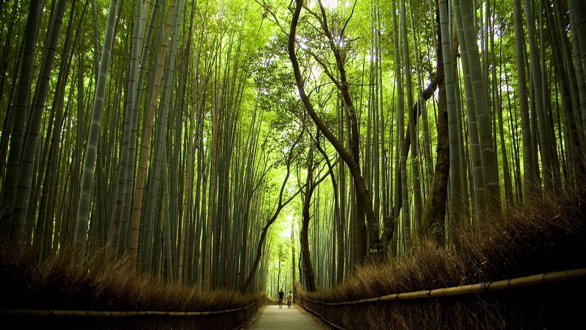 Amazing Forests In The World