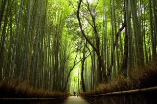 The Most Amazing Forests You Can Find In The World