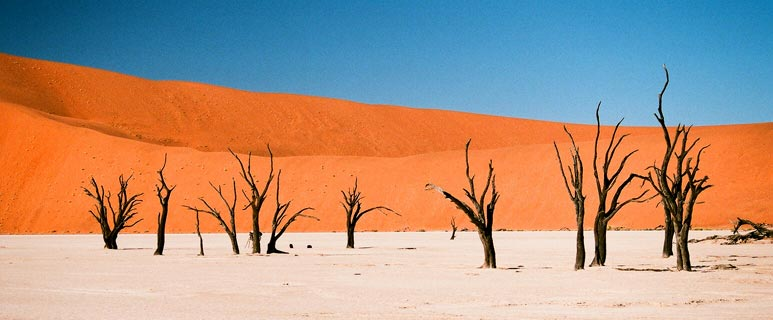 Deadvlei Forest, Namibia