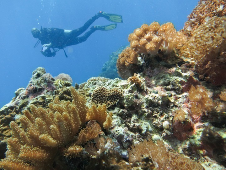 Diving in Gato Island, Cebu
