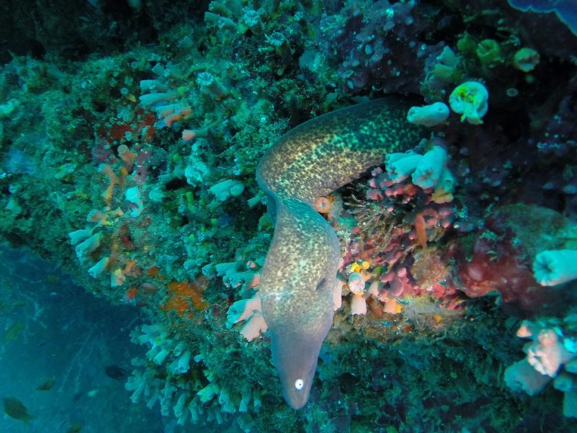 Diving in Pescador Island, Cebu