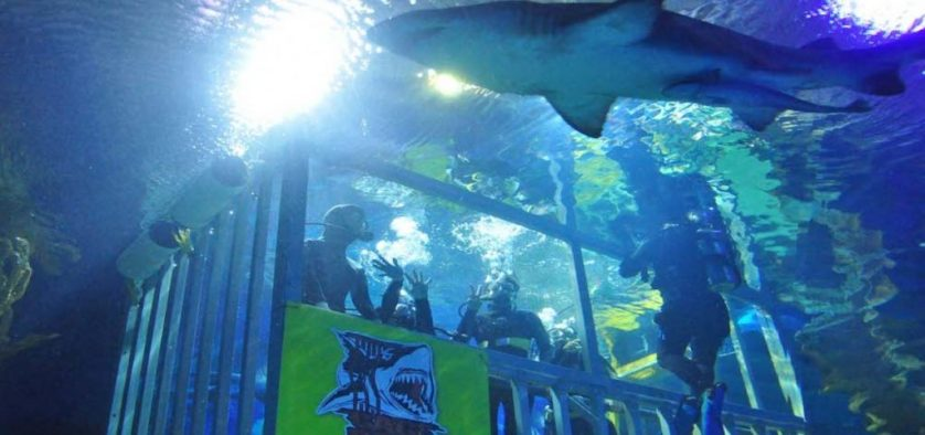 Shark Diving In Malaysia