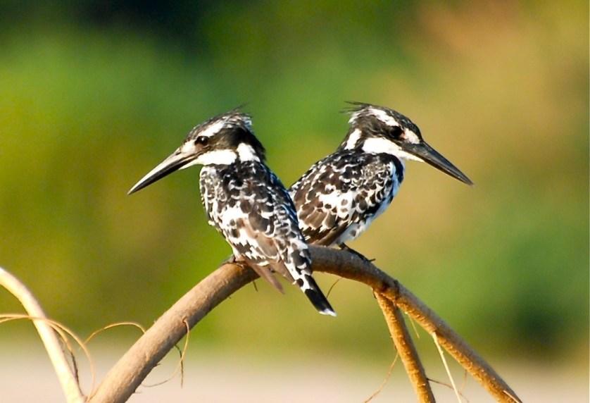 birding-in-tanzania