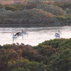 These Are Australia's Very Best Birding Destinations