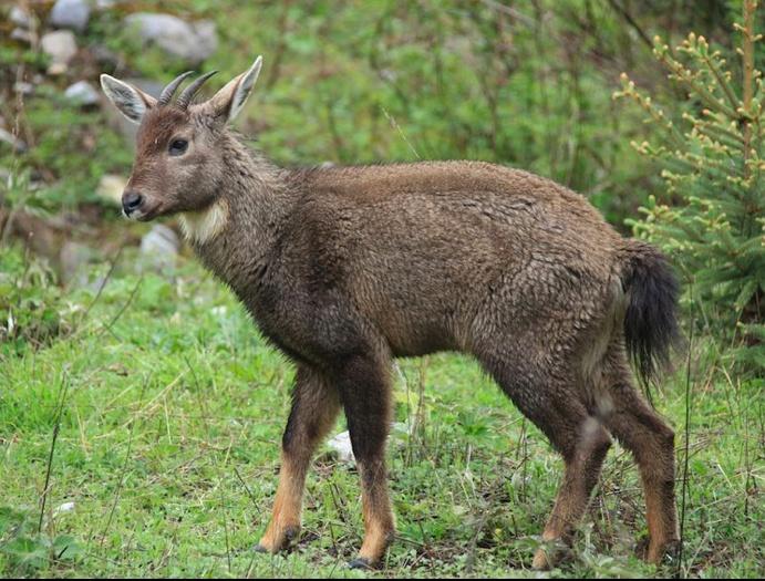 Wildlife In Jiuzhai Valley National Park