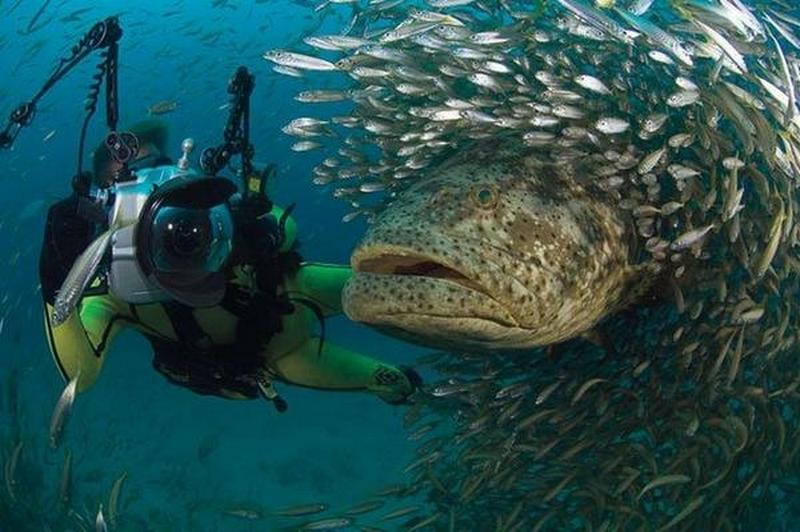 Snorkeling Sites In Koh Tao, Thailand
