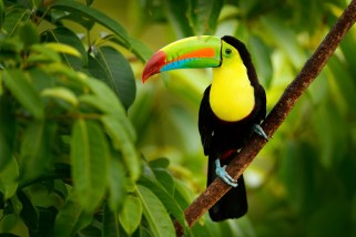 Important Costa Rica Travel Tips For A Better Getaway