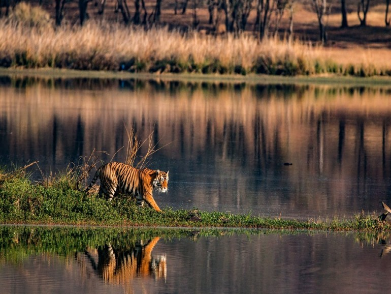 Tiger reserves in Madhya Pradesh to be closed for three months.