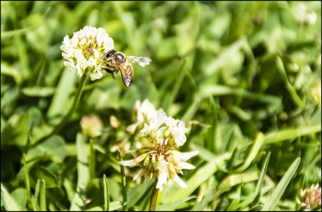spring in the mountains, Honeybee