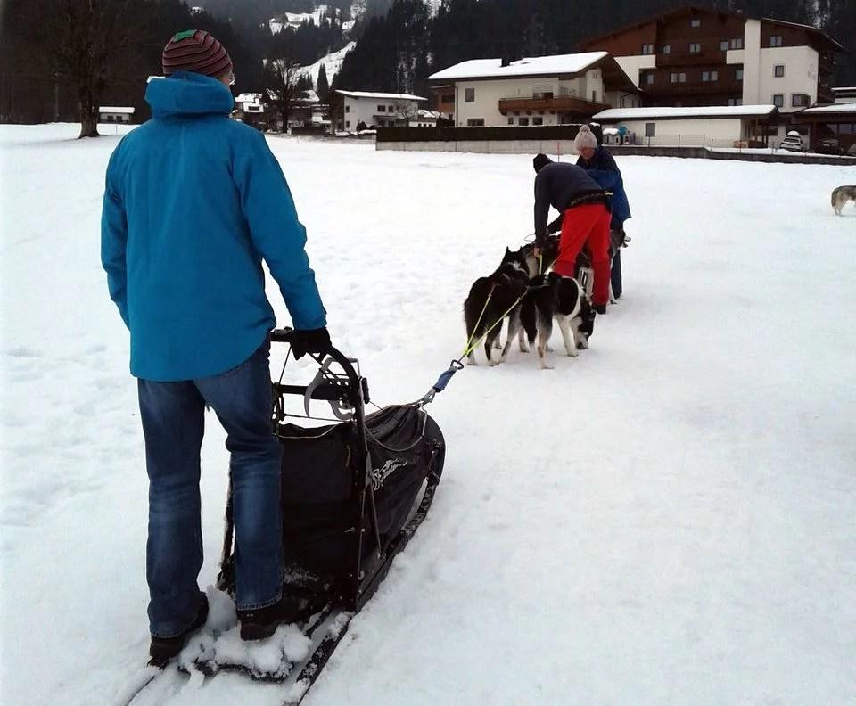 Huskies in Austria in winter.