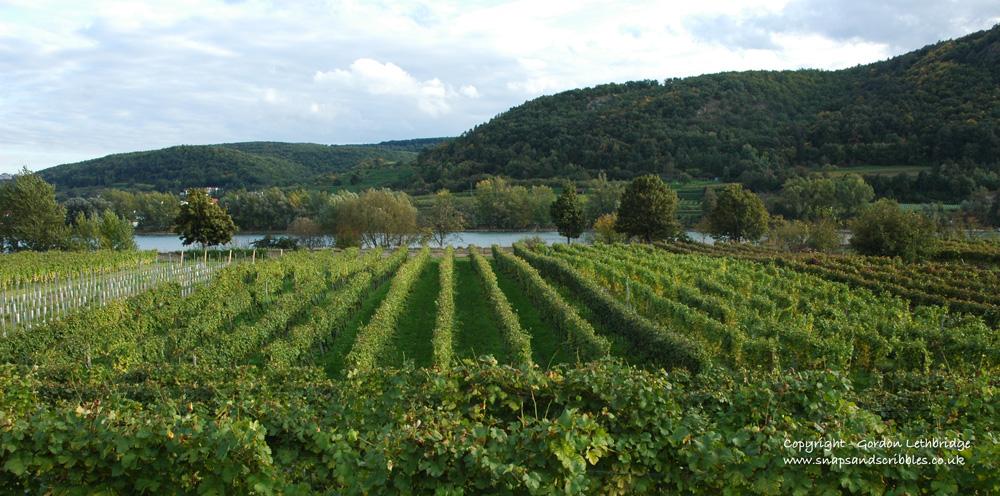 Wachau vineyard beside the Danube
