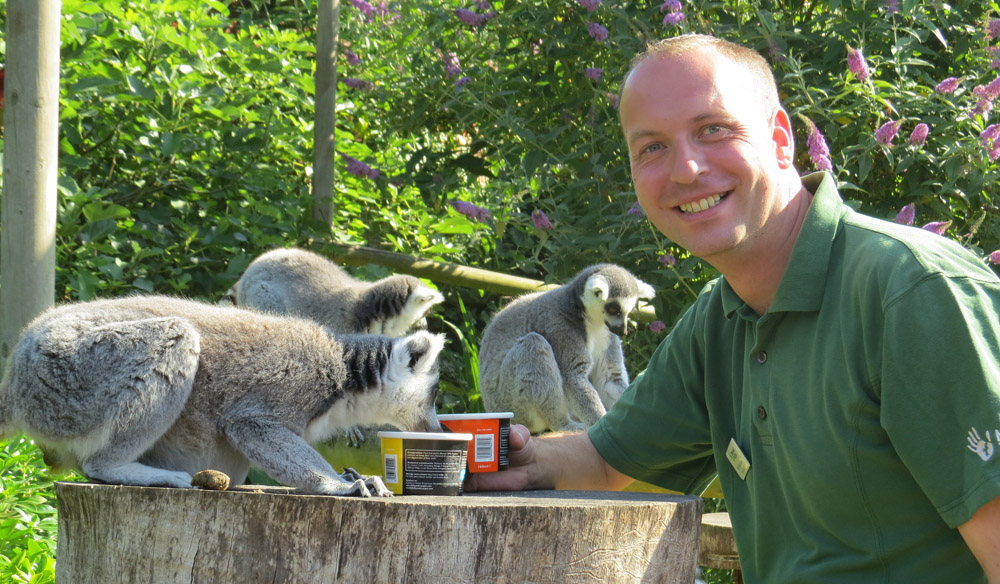 The lemurs at Marwell Zoo getting waiter service and a an iced treat in the heatwave - Photo courtesy of Marwell Wildlife