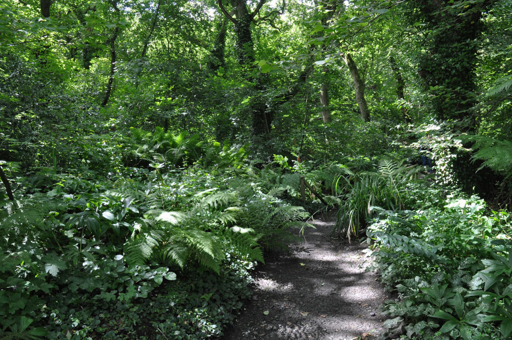 The woodland walk at Docton Mill Gardens
