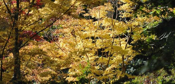 Autumn visit to Exbury Gardens