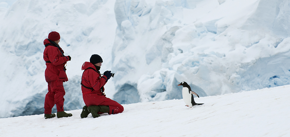 Penguins - Photography