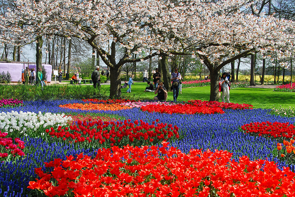 A great deal of interest is crammed into the eight weeks Keukenhof is open