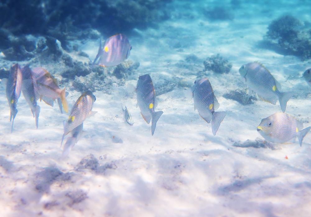 Ningaloo snorkelling