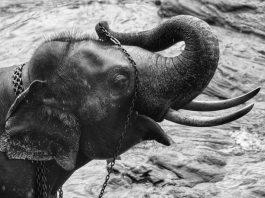 Orphaned Elephants - Yogis in my life