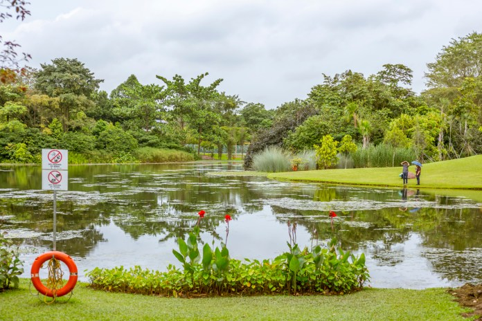 Singapore Botanic Gardens - A Forest in the City that is truly beautiful
