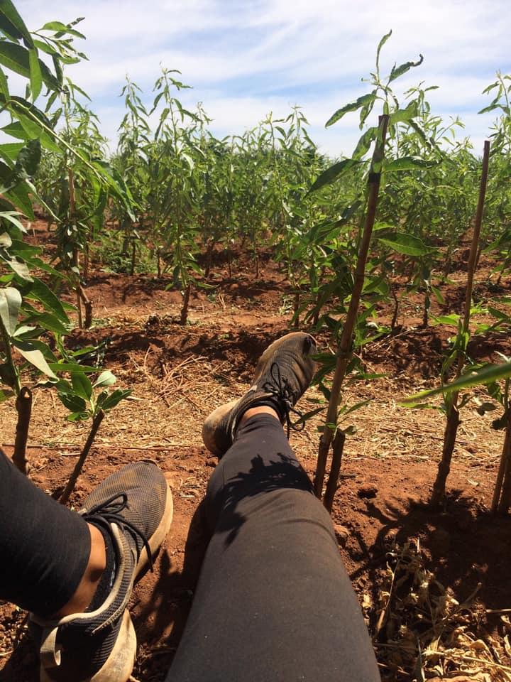 La mia esperienza nelle farm australiane