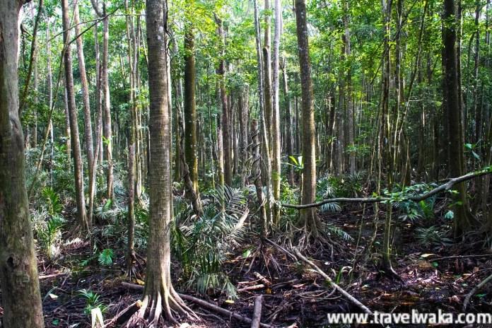 Lekki Conservation Centre forest