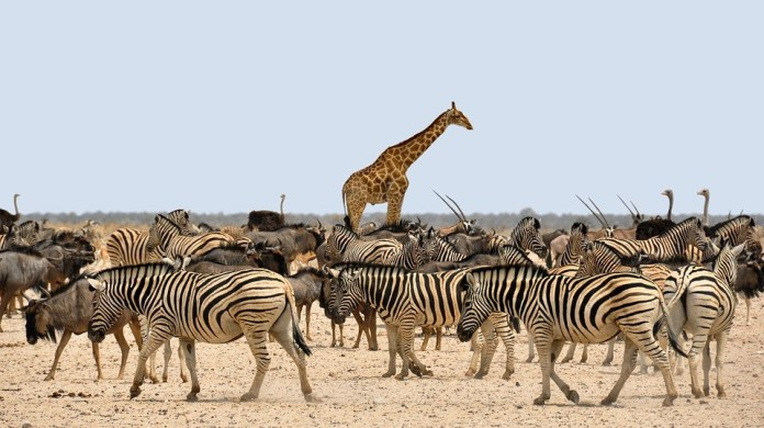 Top Tourist Attractions in Namibia