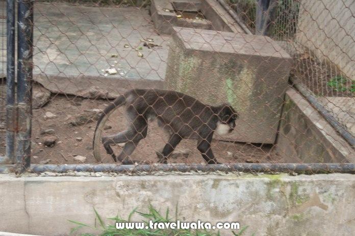 monkey ibadan zoo