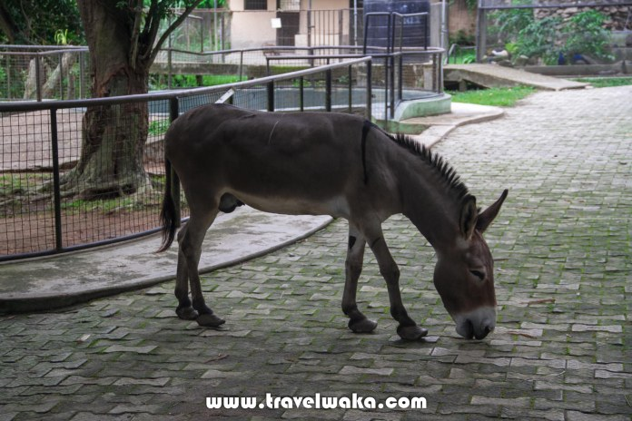 donkey ibadan zoo