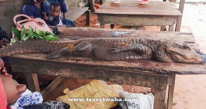 crocodile at epe fish market