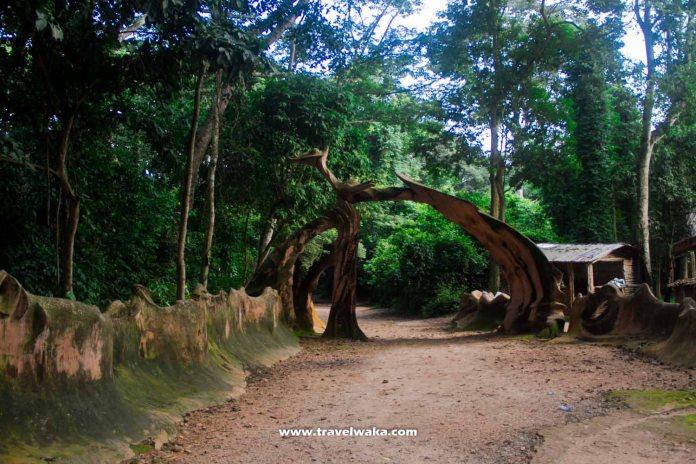 entrance of osun osogbo grove