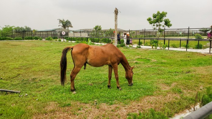 horse at Omu resort
