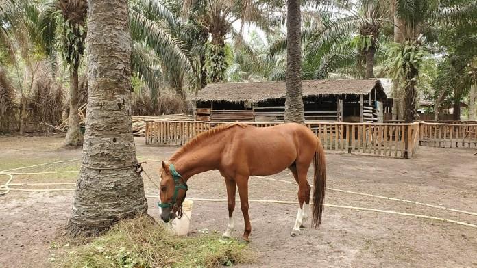 horse ride at lufasi