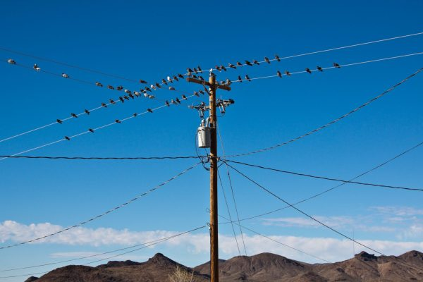Birds on power lines in Arizona