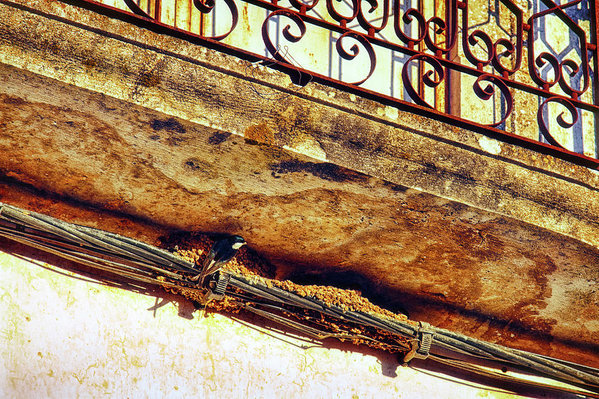 Swallow nest under a balcony - Juxtaposition At Springtime In Portugal