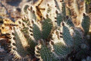 Mohave desert light