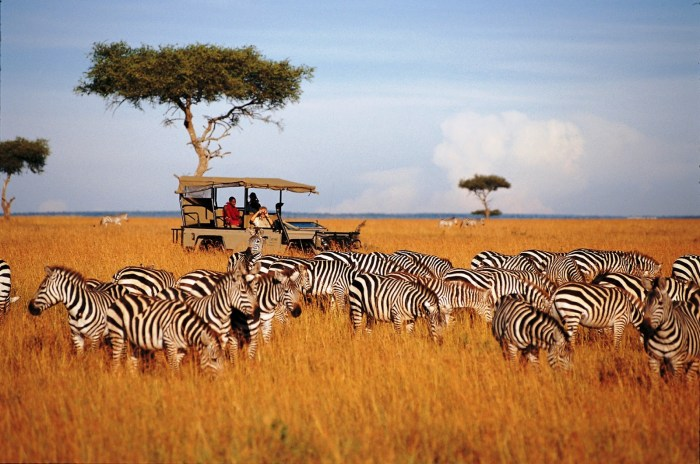 The Serengeti National Park - Travel Wide Flights