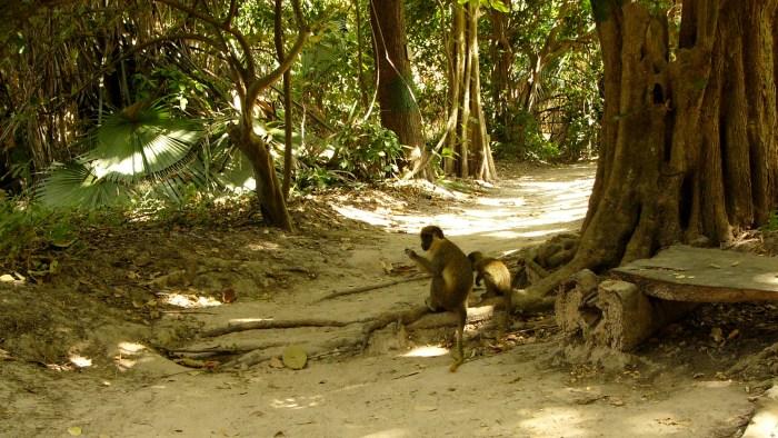 Bijilo Forest Park Gambia
