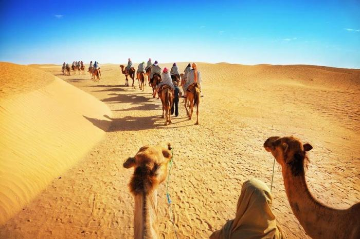 Camel Safari Travel Wide Flights