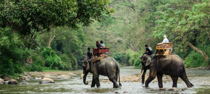 Nepal's Best Destination for Wildlife Safari