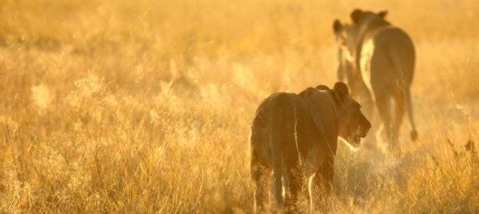 Top Best Safari Places in Africa