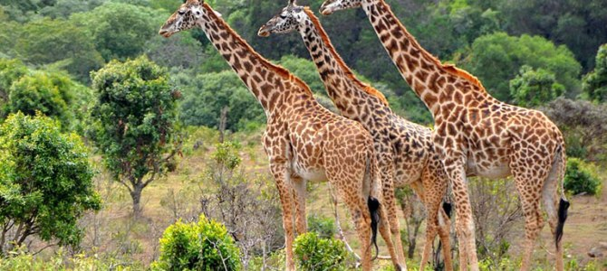 National Parks Of Tanzania | Safari Tourism