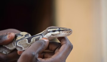 python temple ouidah