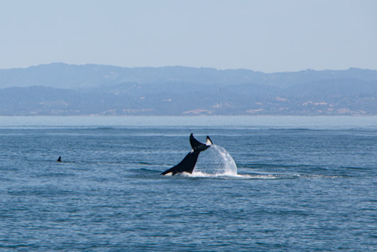 San Francisco to Monterey Whale Watching