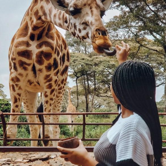 Giraffe Centre Kenya