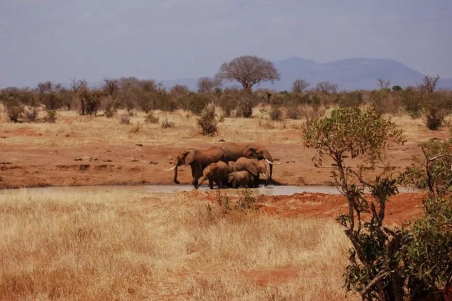 Red Elephants of Tsavo SGR Sightings