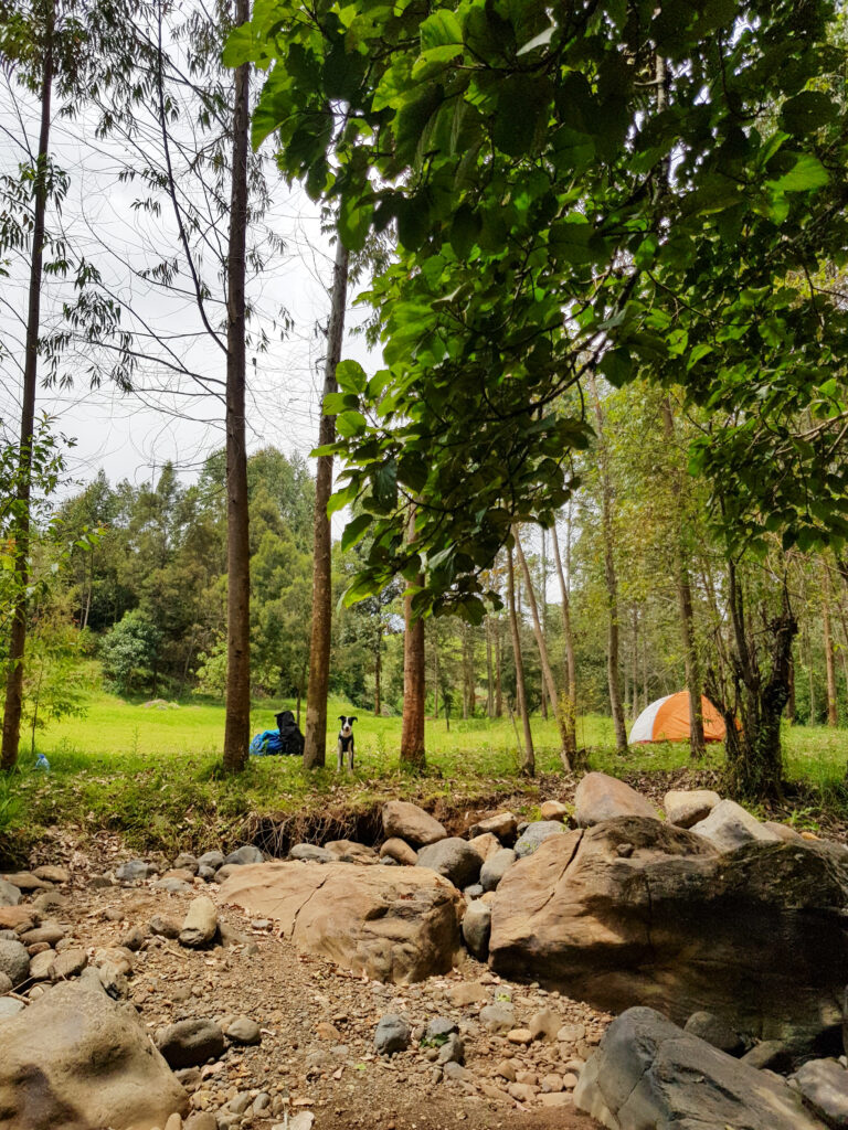 Aberdare Camping
