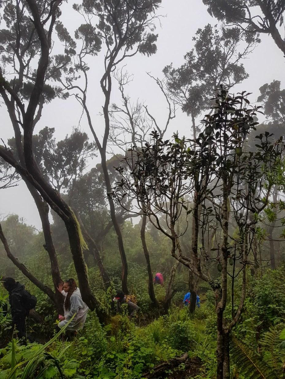 Elephant Hill Hiking