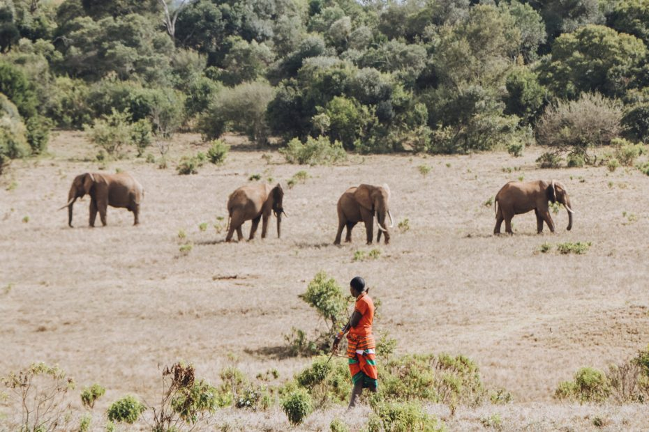 Ngare Ndare Forest Elephants