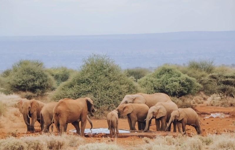 Amboseli Lodge with Watering hole views